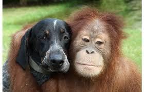 very differnt animals.part 3